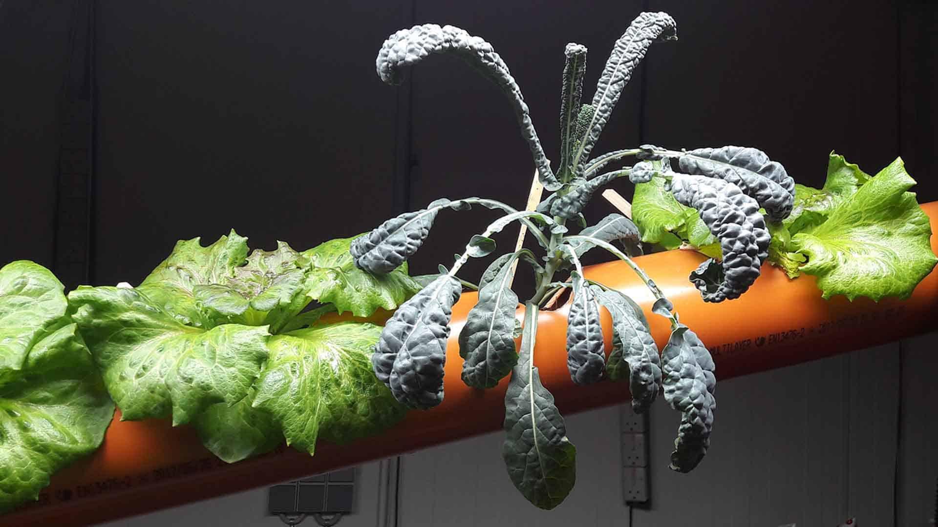 pvc pipe resue urban agriculture